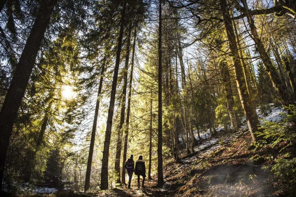 a couple on a hike