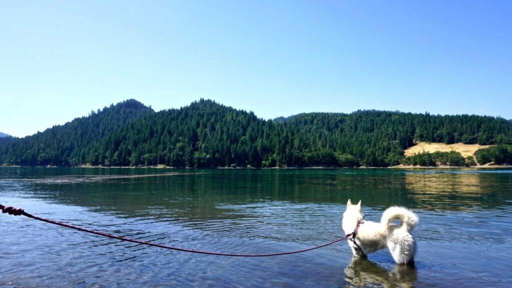 Wilder dog leash, zero waste camping trip with white husky